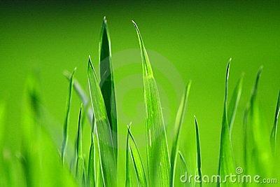 lush-green-grass-4709503